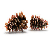 Pine-cones Stock Image