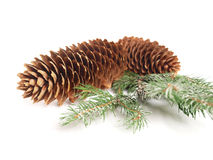 Pine cones. Two cones and snowy branch Stock Photography