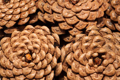 The pine cones Royalty Free Stock Photos