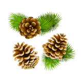 Pine cones. Branch of fir tree and pine cones Royalty Free Stock Image