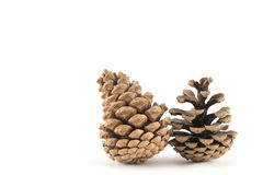 Pine cones. Two pine cones on a white background Royalty Free Stock Image
