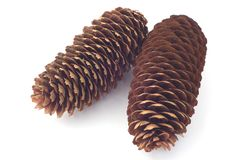 Pine cones. Isolated pine cones on white background Stock Image