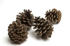 Pine cones. Isolated large pine cones Royalty Free Stock Photos