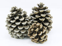 Pine cones. Several cones pins  on white, background Royalty Free Stock Image