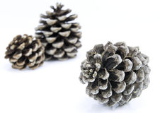 Pine cones. Several cones pins  on white, background Royalty Free Stock Images