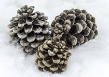Pine cones. Several cones pins  on white, background Stock Photography