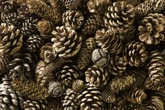 Free Pine Cones Stock Photos - 3953013