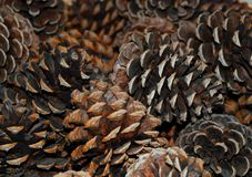 Pine cones. Weathered stack of pine cones Stock Photos