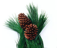 Pine cones. And needles against a white background Stock Photography