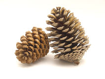 Pine cones. 