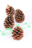 Pine cones. Four pine cones isolated with white background royalty free stock image
