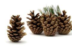Pine cones Royalty Free Stock Photo