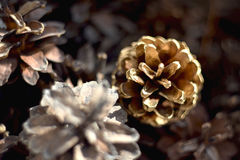 Pine cones. All the beauty in simplicity Stock Photo