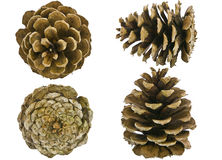 Pine cones all views isolated Stock Image