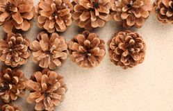 Pine cones arranged on the sand. Stock Image