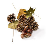 Pine cones and autumn leaves Royalty Free Stock Photo