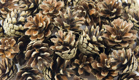 Pine cones background Royalty Free Stock Photography