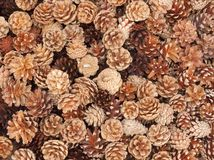 Pine cones background. Pine cones of different shapes and colors (Christmas decoration stock images