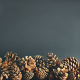 Pine cones background. Stock Image