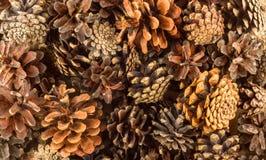 Pine cones background Stock Photos