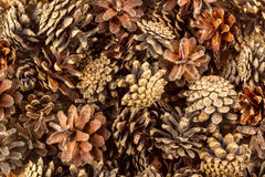 Pine cones background Stock Photography
