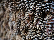 Pine cones background Christmas decoration Royalty Free Stock Images