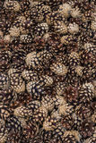 Pine cones background Stock Image