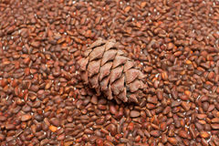 Pine cones on a background of pine nuts Royalty Free Stock Photography
