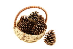 Pine cones in basket. Royalty Free Stock Images