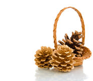 Pine cones in a basket Stock Image