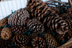 Pine Cones. Basket of pine cones and Christmas lights stock image