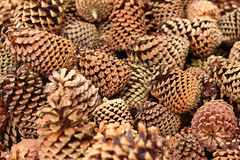 Pine cones in a basket at the garden Stock Images