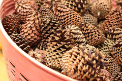 Pine cones in a basket at the garden Stock Photo