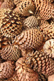 Pine cones in a basket at the garden Royalty Free Stock Images
