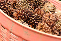 Pine cones in a basket at the garden Stock Image