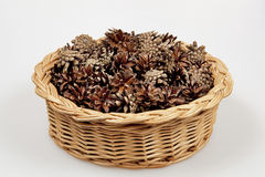 Pine cones in a basket. Royalty Free Stock Image