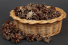 Pine cones in a basket. Stock Images