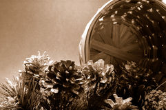 Pine Cones with Basket (Sepia) Royalty Free Stock Photos