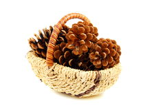 Pine cones in a basket. Royalty Free Stock Photo