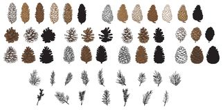 Pine Cones. A big set of pine cones in various styles and types, also some pine needles and boughs vector illustration