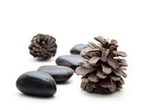 Pine cones with black stones Stock Image