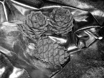 Pine cones on a black and white image Royalty Free Stock Photos