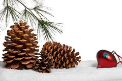 Pine cones and bough in snow Stock Photo