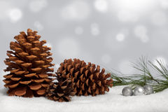 Pine cones and bough in snow Stock Images