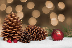 Pine cones and bough in snow Royalty Free Stock Photos
