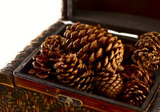 Pine Cones Home Decoration. Pine cones from a tree stacked into a woven wooden box for a seasonal, holiday home decoration or accessory Stock Image