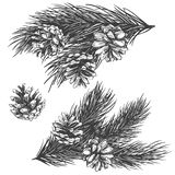 Pine cones on branch collection hand drawn vector illustration realistic sketch stock illustration