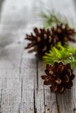 Pine cones and branch on rustic wood background Royalty Free Stock Photo
