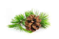 Pine cones and branch. White pine branches and cones photographed in the ground Royalty Free Stock Photo