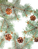 Pine cones and branches assortment isolated on white background Royalty Free Stock Photography